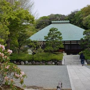 鎌倉浄明寺のムサシアブミ