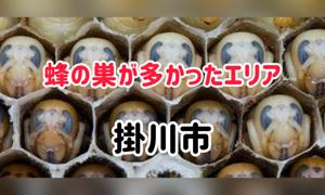 蜂の巣が多かった地区ランキング! 掛川市