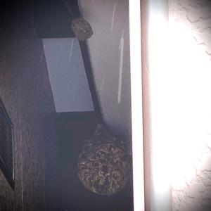 土日祝日も休まず営業中!コガタスズメバチの巣も4段目に!