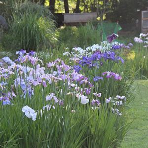 6月のお庭の相談日
