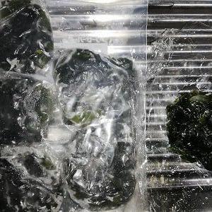 わかめ 冷凍保存