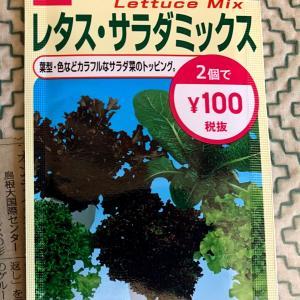 水耕栽培のレタスを自作液肥で育ててみる