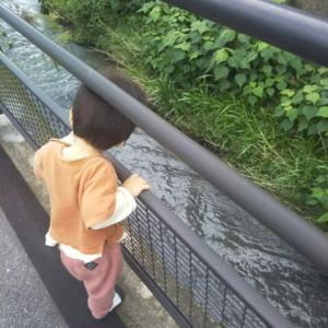 【1歳5ヶ月と9日目】ちょっとした落下事故
