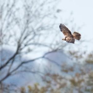 一期一会・・・鳥撮りの記 380 渡良瀬遊水地