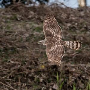 一期一会・・・鳥撮りの記 382 葛西臨海公園