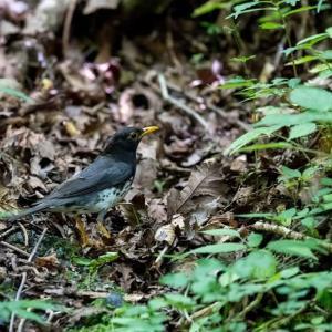 一期一会・・・鳥撮りの記  365 富士山麓の水場