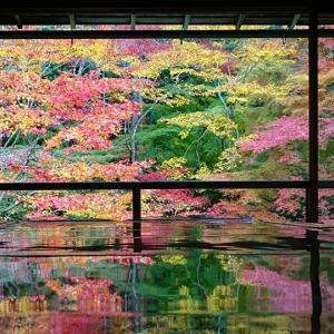 京都「八瀬大原 瑠璃光院」「瑞巌山 圓光寺」の紅葉。