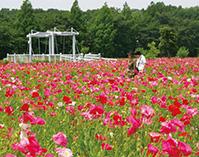 水と緑と花のまち西区 懐かしの風景満喫ハイキング(埼玉県さいたま市)