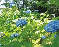中央線のど真ん中、小金井の自然と歴史を巡るハイキング(東京都小金井市)