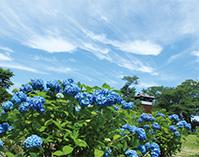 満喫!!くろばね紫陽花まつり(栃木県大田原市)