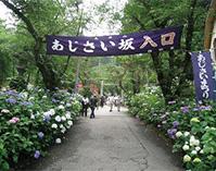 太平山のあじさいめぐり(栃木県栃木市)