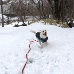 雪遊びです。