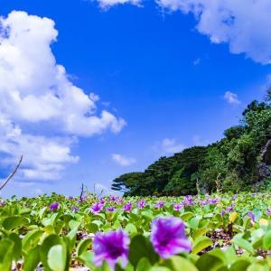 新型コロナ、日本で重症化率・死亡率が低いワケー東洋経済オンラインからー