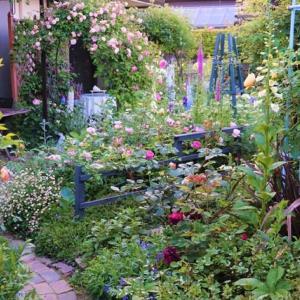 今朝の庭、、、迷い