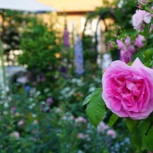 雨で荒れてしまったお庭が再生してきました♪