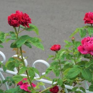 薔薇庭への思い