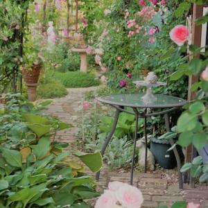 今日の庭~剪定作業始めました^^