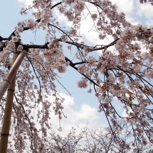 春のおでかけ、尾道へ♪ 初リサ・ラーソン&イイホシユミコさんの器に感激