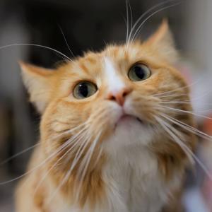 おはようございます#犬 #イヌ #dog #柴犬 #siba#猫 #ネコ #cat ...
