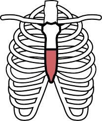″胸椎″の動きが重要!?