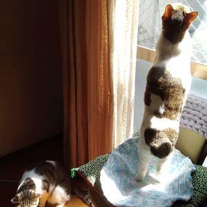 猫観察と編み直し