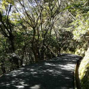 山歩きと河津桜