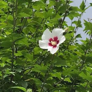 花はしずかに咲いている