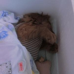 愛犬タカランが天国に、、最後は自分の腕の中で、スッと天国に旅立ちました。