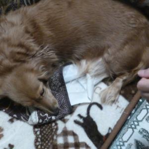 当時愛犬タカラン通じての縁、、タカランのママ、、そしてそれぞれのワンちゃんの絆^^そして