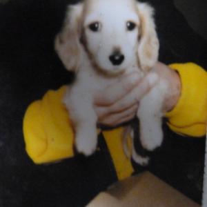 愛犬、タカランについて語ります、、、生後数か月で、、うんちまみれで、、やきもち焼きでしたね、、、