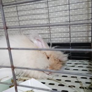 おうちウサギの日常