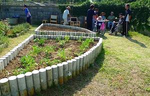 落下生の定植、ジャガイモの植え付け