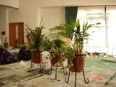 観葉植物のセラミス植え
