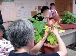 枝豆収穫・試食
