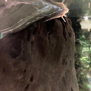 Neet / ヒメツメガエルは悲しんだ?