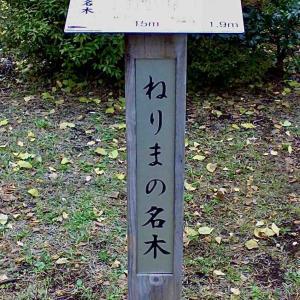 シリーズ・リアル世界の路地裏で @ 東京都練馬区光が丘「光が丘公園散策・パート2」(リプライズ・リエディット・リライト・リプレイス)