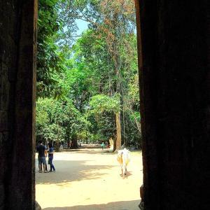 旅の空 @ カンボジア・シェムリアップ 「アンコール・ワット遺跡群 バンテアイ・クデイ (Banteay Kdei、 ប្រាសាទបន្ទាយក្តីម)周辺の空