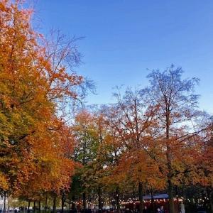 近所の紅葉も見頃の最後に♪ @ ブリュッセル公園