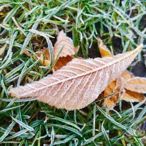 今朝の気温は氷点下2℃♪