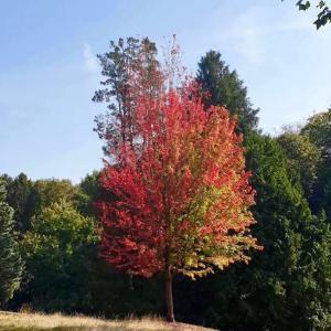 この秋最初の紅葉みーっけ♪