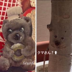 手術から一年…閲覧注意(ボカシ入り) * 可愛いクマさん