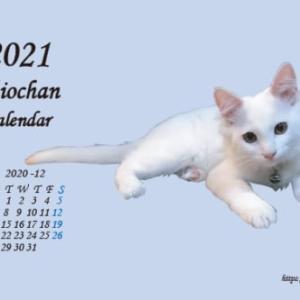しおちゃん月別卓上カレンダー♪
