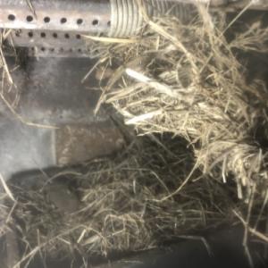 害鳥と害虫と戦う煙突掃除