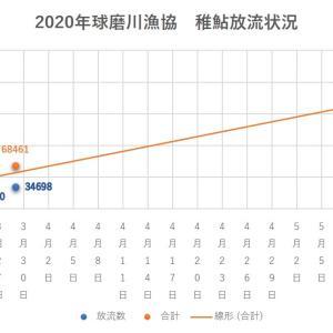 2020年 球磨川水系稚鮎放流情報 3/29現在