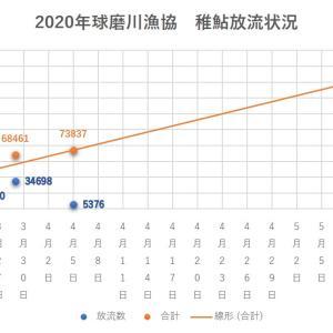 2020年 球磨川水系稚鮎放流情報 4/5現在