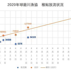 2020年 球磨川水系稚鮎放流情報 4/12現在