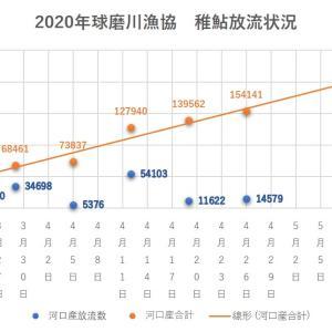 2020年 球磨川水系稚鮎放流情報 4/26現在