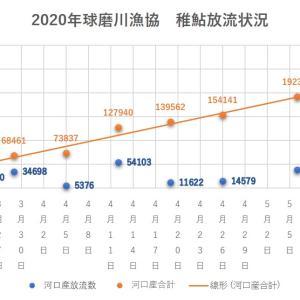 2020年 球磨川水系稚鮎放流情報 5/6現在