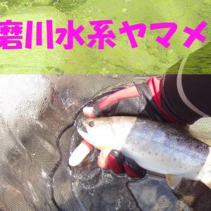 2021年球磨川水系ヤマメ放流情報