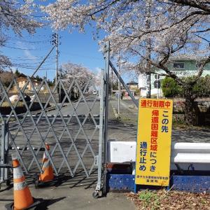 福島第一原発の見学③:夜の森桜